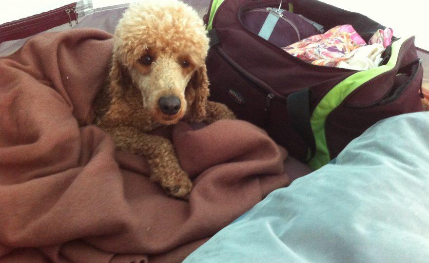 Brauchen Hunde beim Zelten eine Bettdecke?