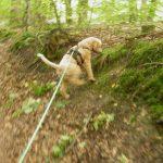 Hund beim Mantrailing