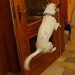 Der dreibeinige Hund Roger springt vor Freude