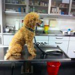 Hund auf dem Tierarzttisch