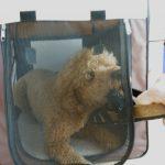 Zerrspiel aus der Hundehütte