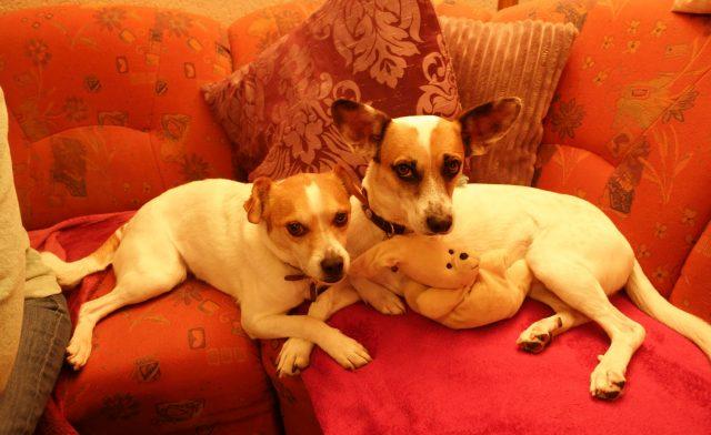 Meine dreibeinigen Hunde-Freunde