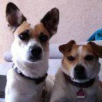 dreibeinige Hunde Roger und Bobby