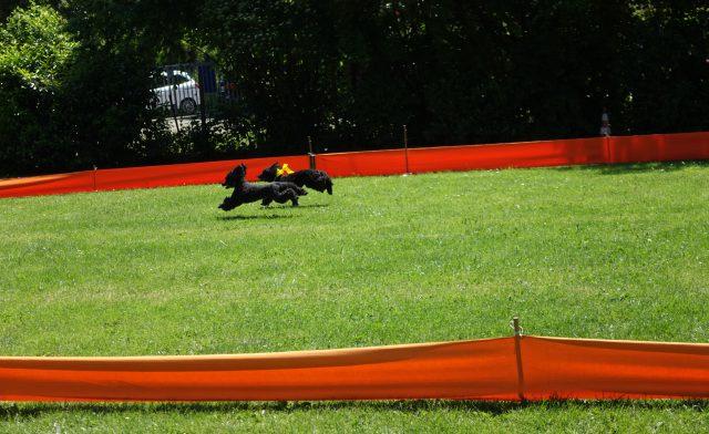 Auf dem Pudelrennen in Karlsruhe 2019